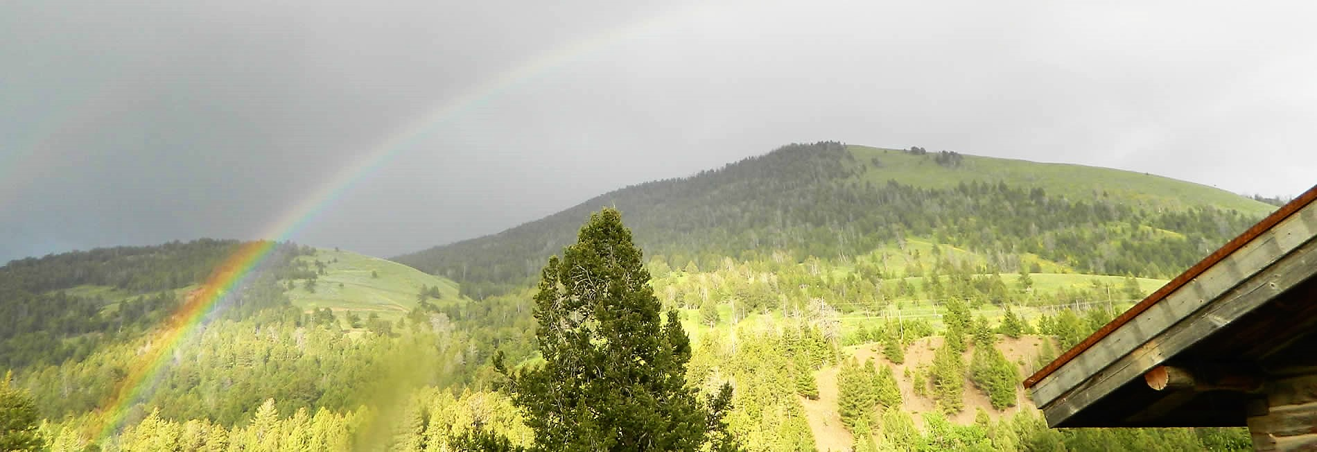yellowstone national park forest scene with rainbow